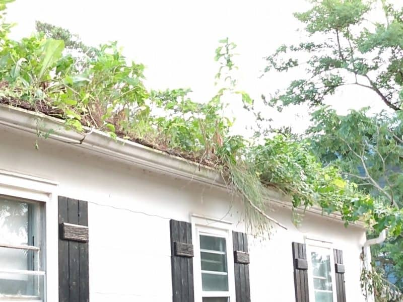 Neglect allows nature to take over. Trees are growing in the gutter and roof.