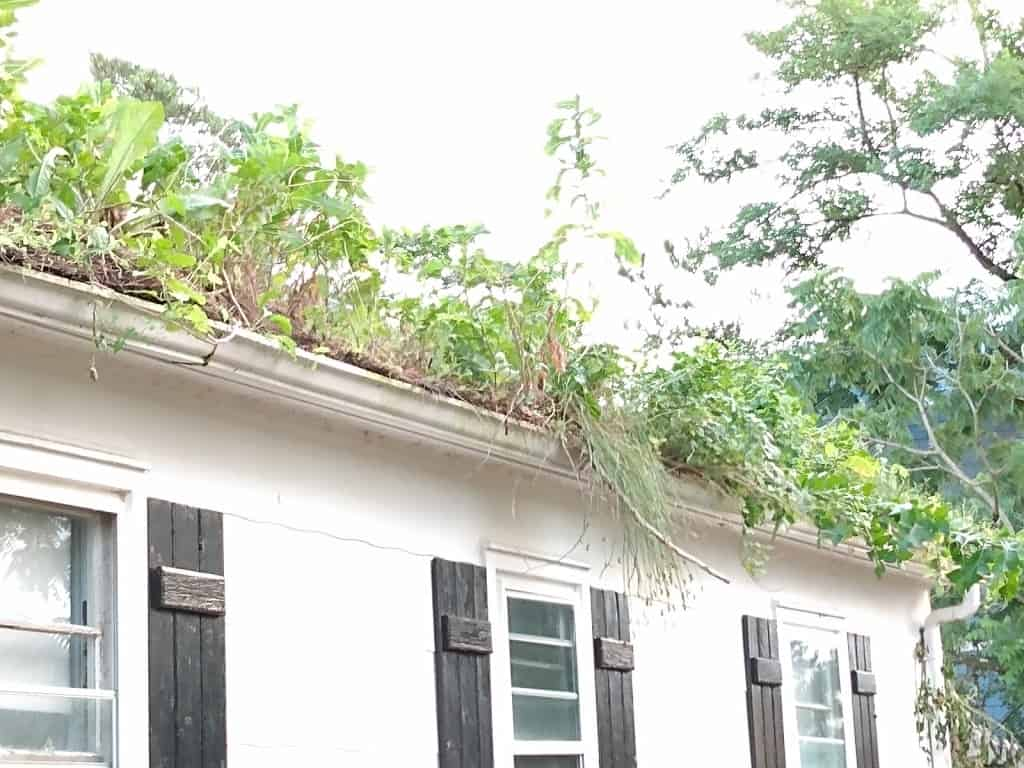 Neglect allowed nature to take over - Trees and grass growing in the gutter and roof.